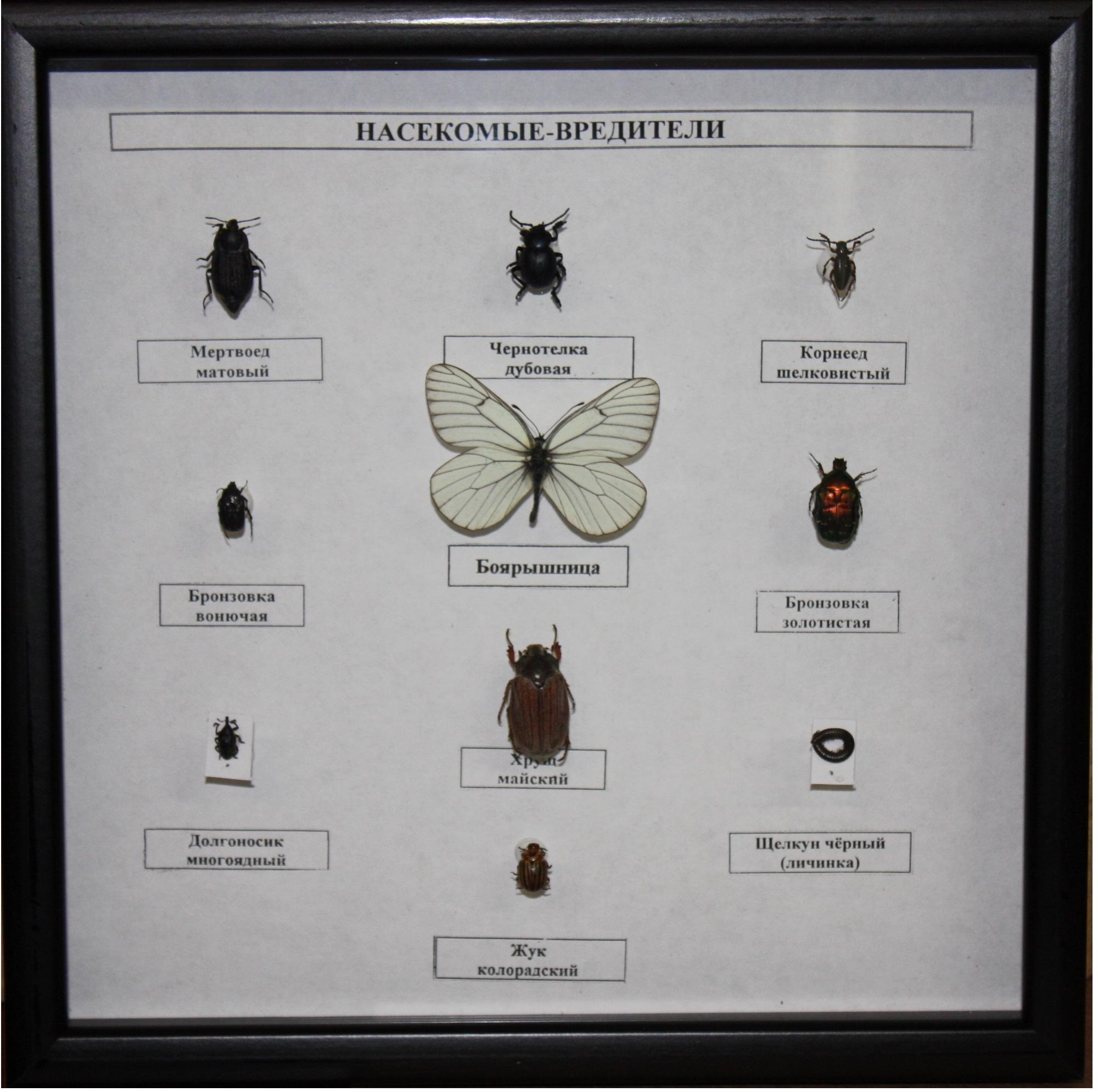 Гербарий из насекомых своими руками фото